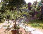 france - saisonnière - saisonnière -  Ref : 230001/jardin2
