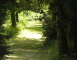 vacance - location saisonnière - saisonnière -  Ref : 252001/bois1